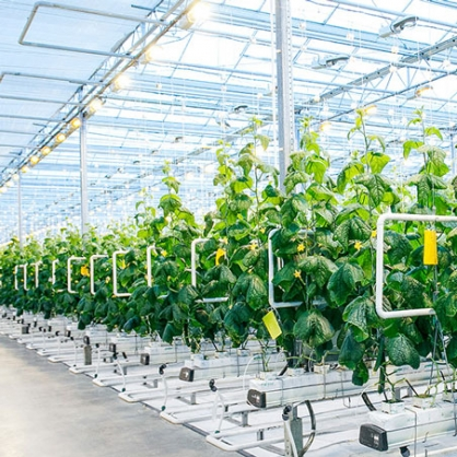 High-tech agriculture